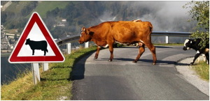 Auto Collisions with Farm Animals