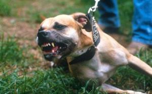 Settlement of a Minor's Dog Bite Case