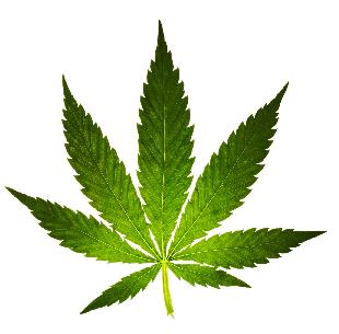 medical marijuana for relief of chronic pain