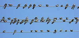power lines w birds