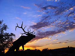 Elk Grove Western Festival