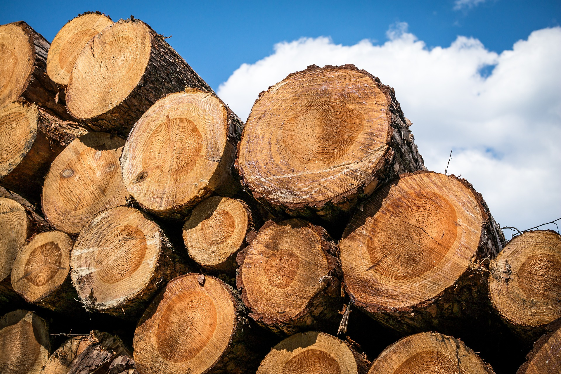 wood-1318872_1920
