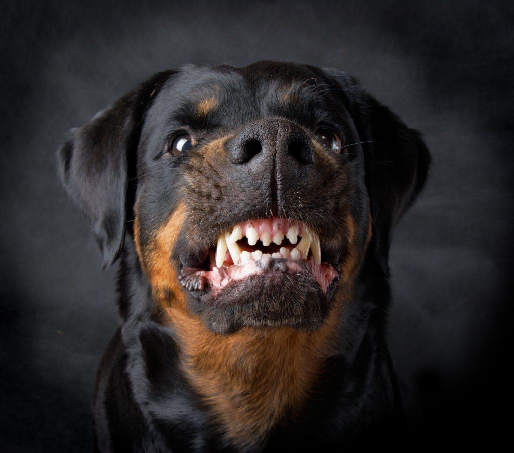 Rancho Cordova Dog Bite Injuries