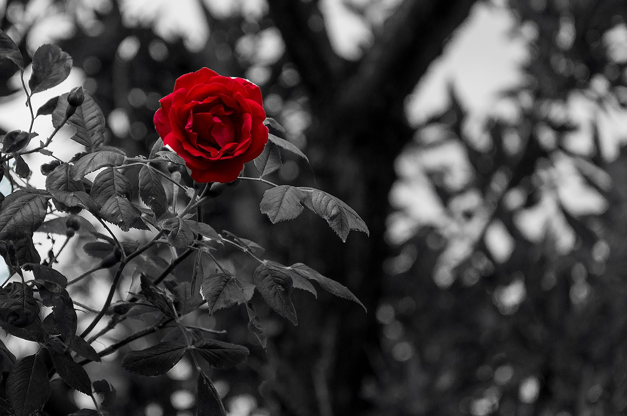 black-white-2305547_1280