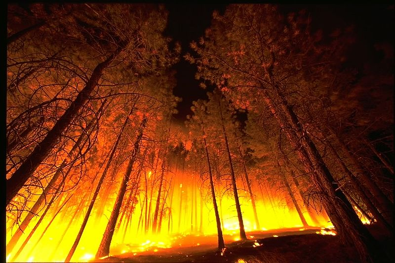 800px-Forestfire2