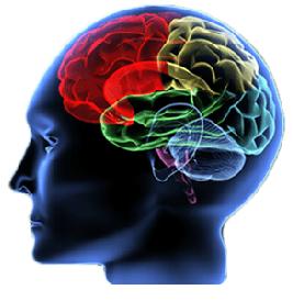 traumatic brain injury and psychosis