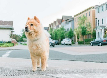 Common Questions and Answers About Dog Bite Injuries