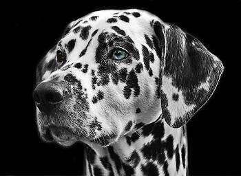 Dog Bite Life-Threatening Injuries Rising