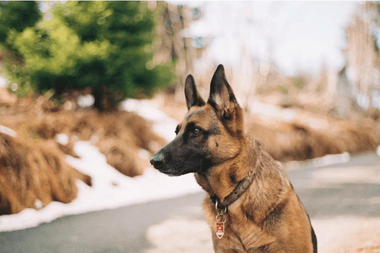 Avoiding-Dog-Bites