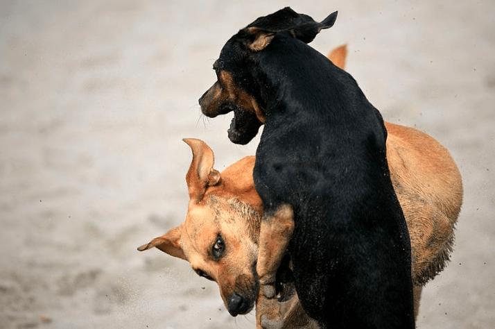 Dog Bites: Prevention & Treatment