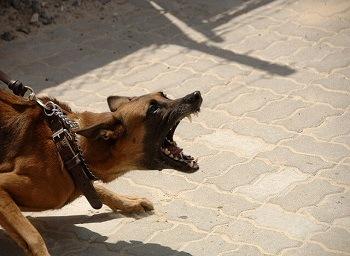 Fatal Dog Attack