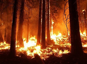 Wildfire Negligence