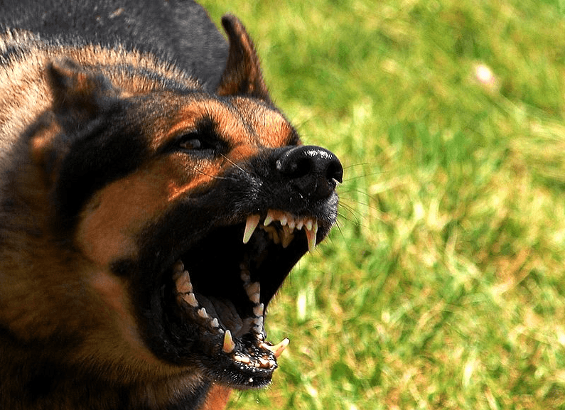 Man Attacked by Pit Bull While Attempting to Save Teen