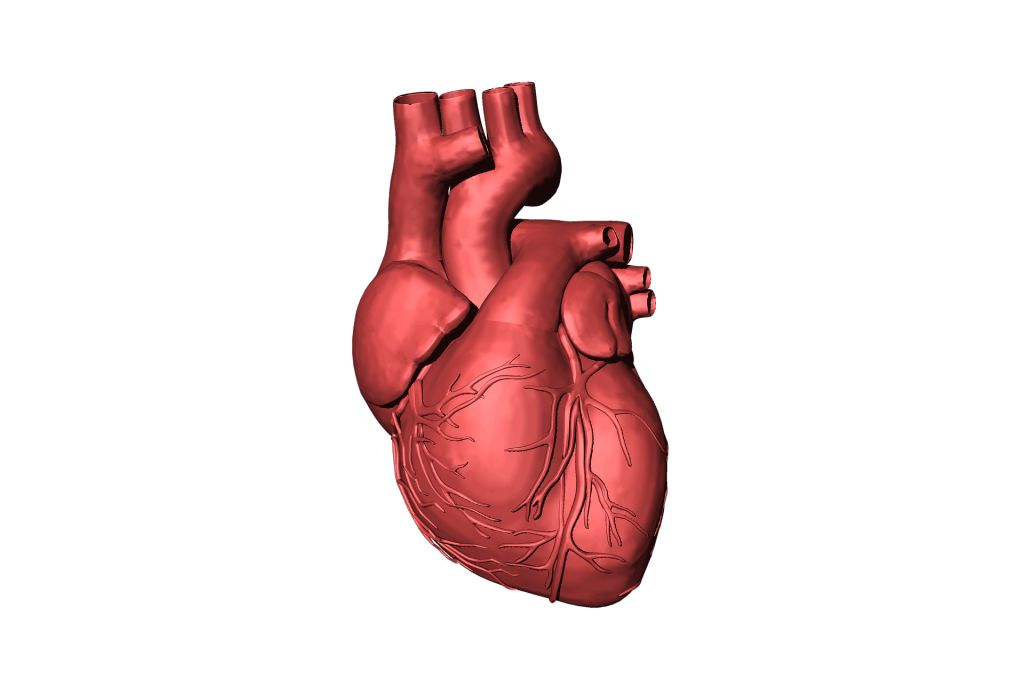 Heart Failure in a Traumatic Accident