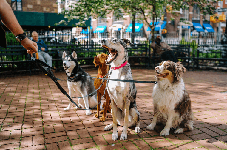 Training Your Dog to Avoid Aggressive Behavior