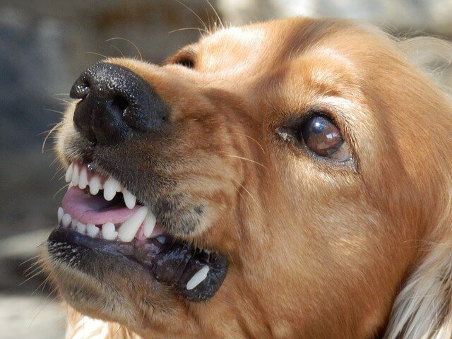 Atwater Dog Bite Lawyer