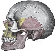 Linear Skull Fracture