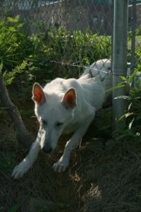 Rancho Cordova Coyote Alert After Pet Dog Killed