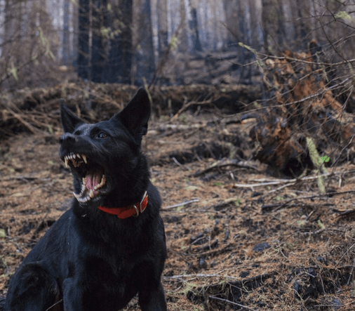 Placerville Dog Bite Injuries