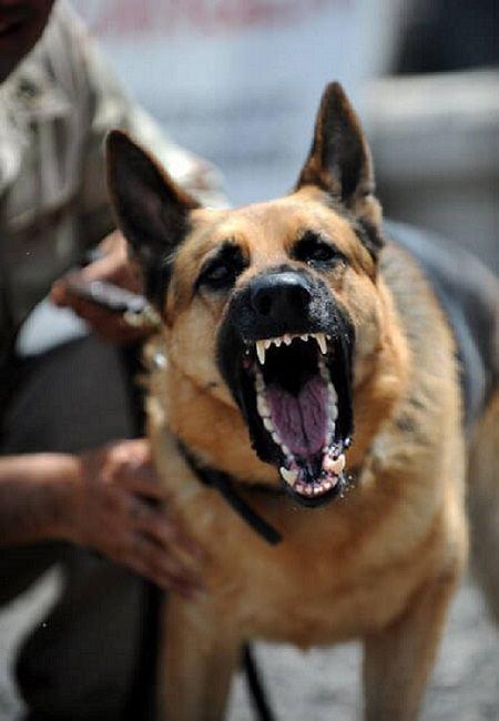 Dog Bite Training to Avoid Aggression