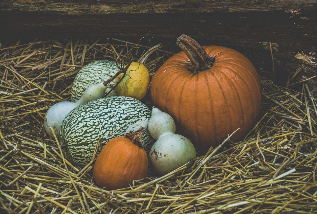 Fall Activities at Harvest Time Farms in Brentwood