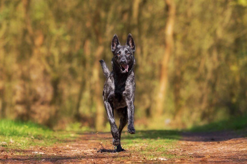 Roseville Dog Bite Attorney
