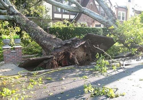 Tree Branch Falls on Passerby in Fair Oaks