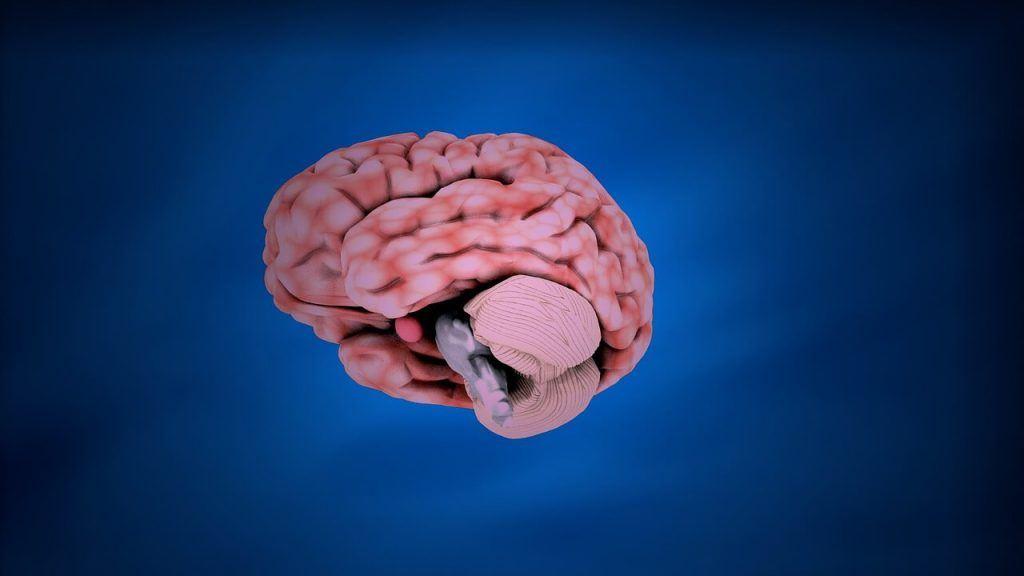 Orangevale Brain Injury Lawyer