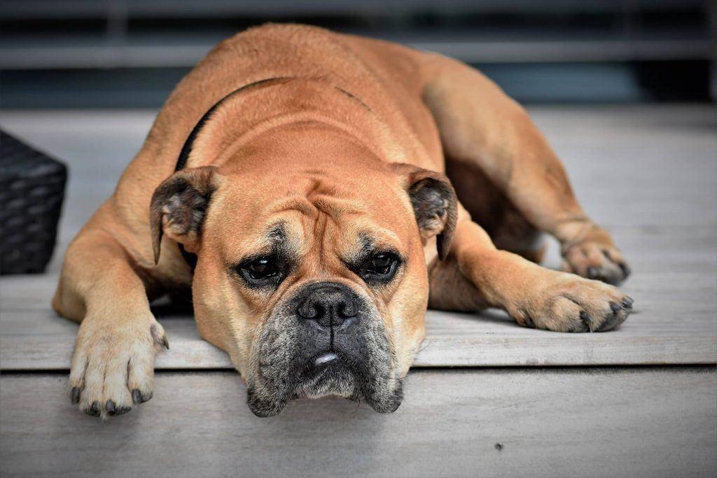 Stockton Dog Bite Lawyer