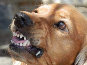 Surgery Following a Dog Bite