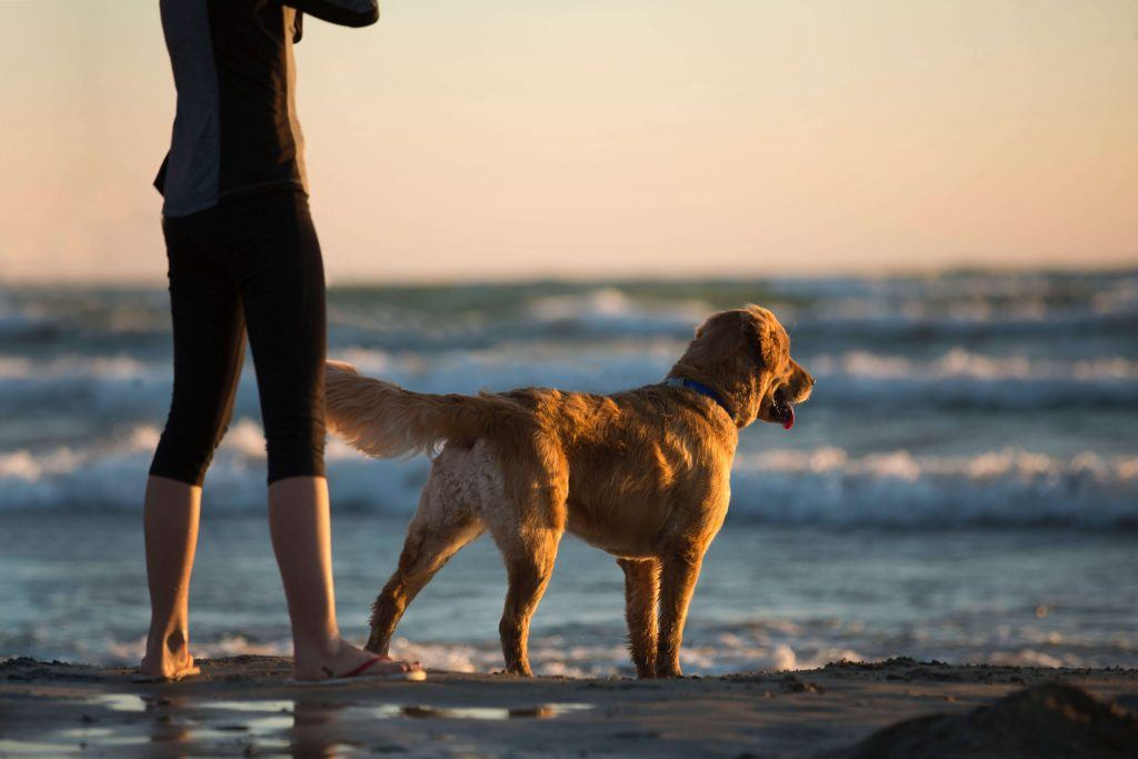 The Benefits of Having a Dog in Your Life