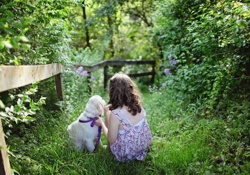 Tips on How to Choose a Family Dog