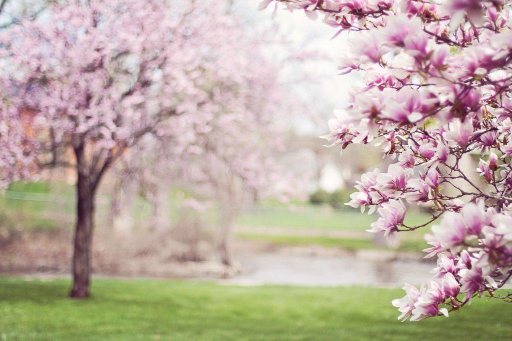 Spring Events in Fair Oaks
