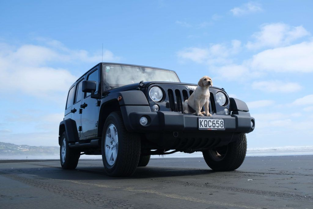 Travel Safely With Your Dog