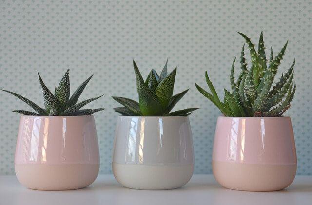 houseplants for health