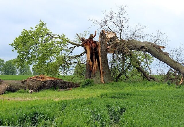 tree fall fatalities