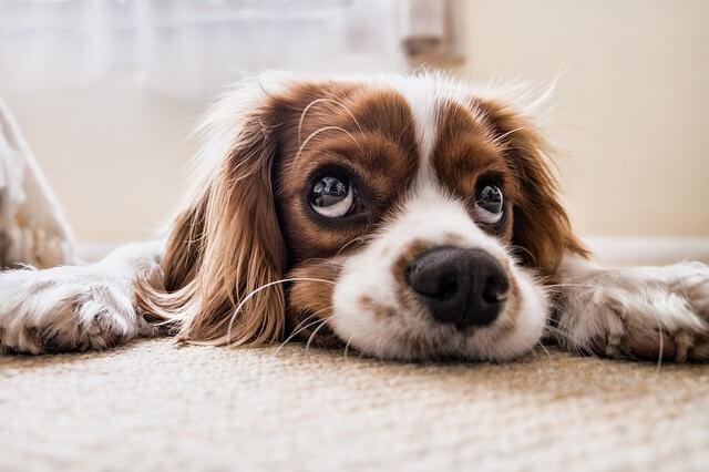 shelter-dog
