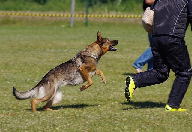 Negligence Per Se Liability for Dog Attack Incidents