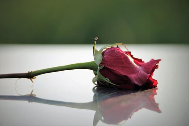 Flower for Salyer crash victim