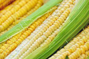 Sloughhouse corn